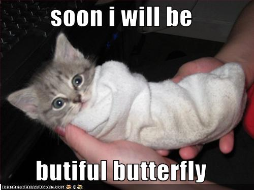 funny-pictures-soon-kitten-will-be-a-butterfly.jpg