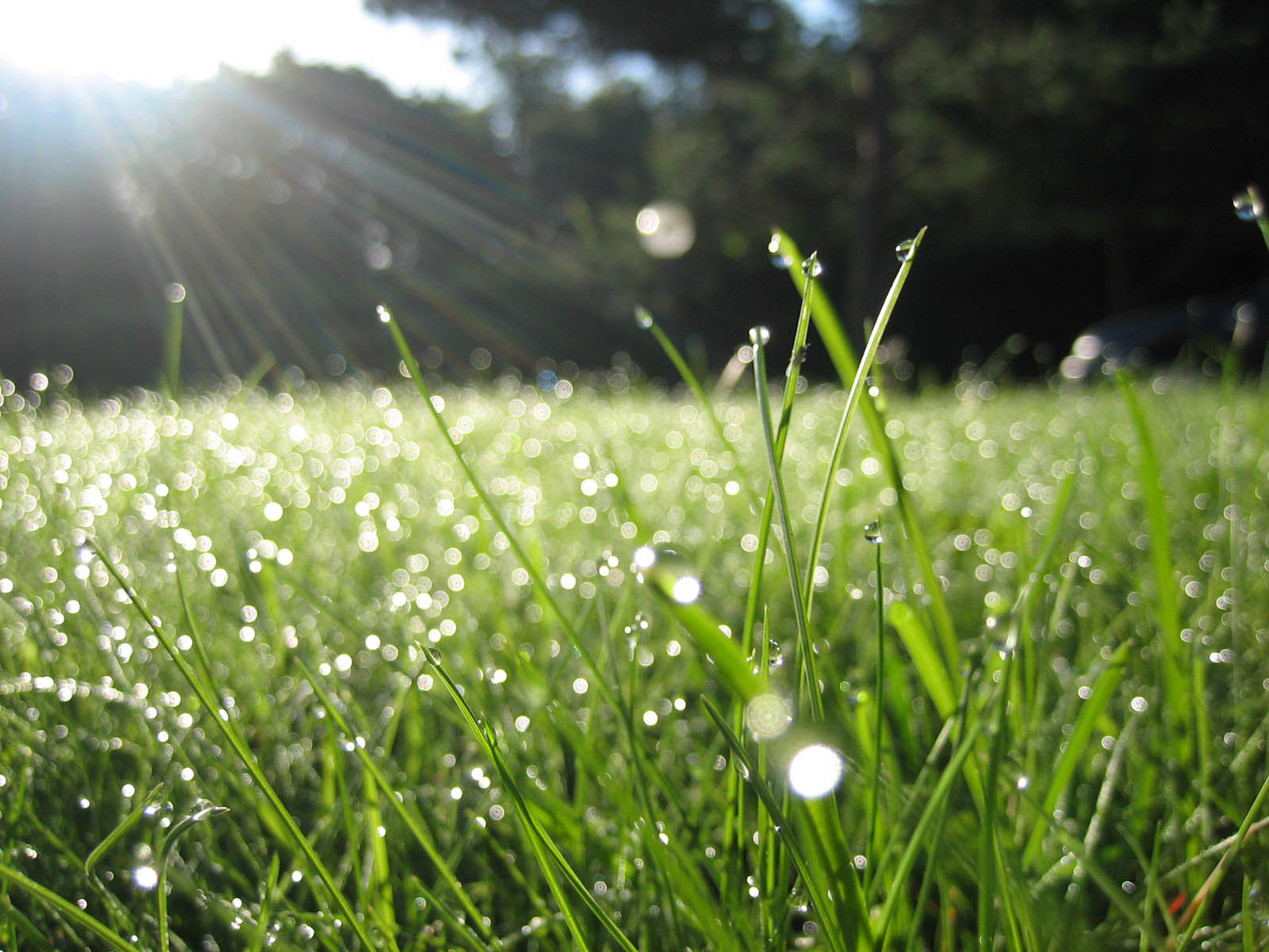 May morning dew