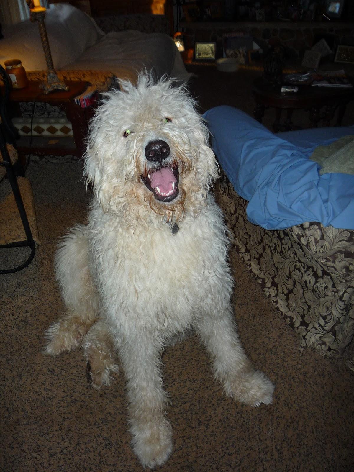 Big Dog Rescue Az