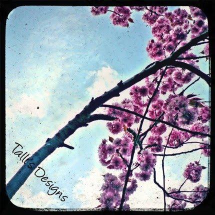 [Cherry+Blossom+Sky]