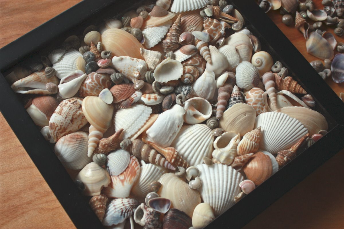 Seashell shadow box for What are shells made of