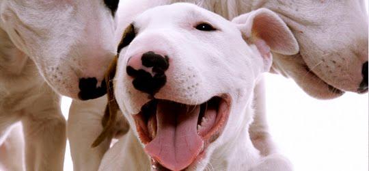 Guia de Raças e Canis