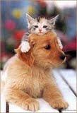 Eu amo os animais