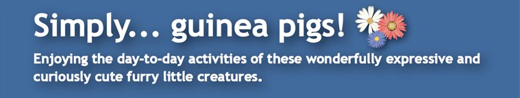 Simply... guinea pigs!