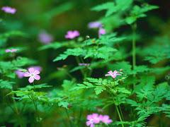 Skogen er full av blomster