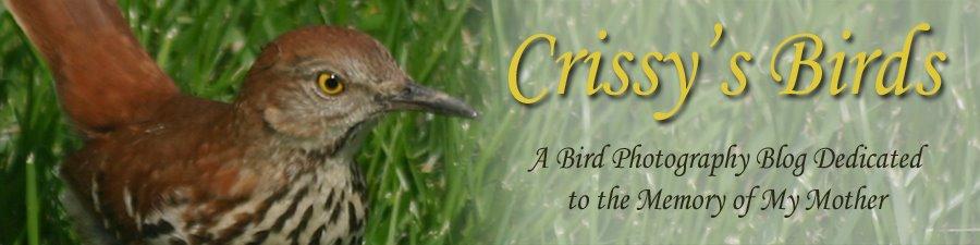 Crissy's Birds