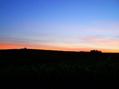 pidic encadrees photographie photoblog amateur bordeaux gironde couchant vignes entre-deux-mers langoiran
