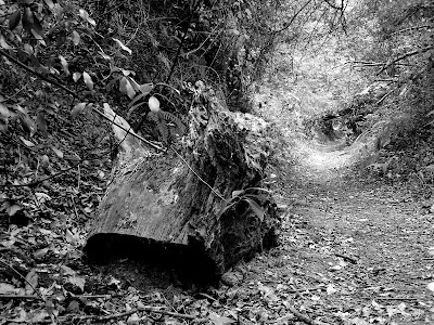 pidic encadrees photo amateur photographie gironde bordeaux rive droite souche chemin floirac burthe