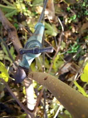 pidic encadrees blog photo amateur bordeaux Robinarbre robinet arbre