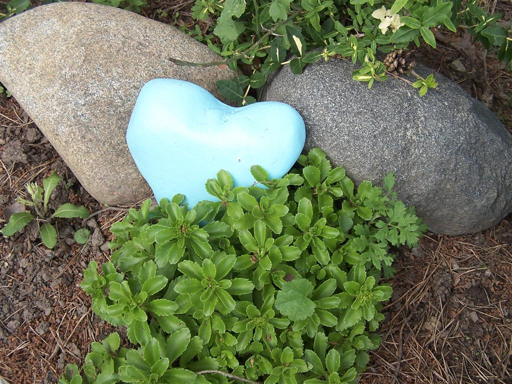 Perennial passion spirea snowmound a special rock and - Painting rocks for garden ...