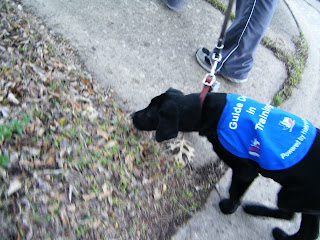 Celia's pulling to the side again, this time to sniff some leaves