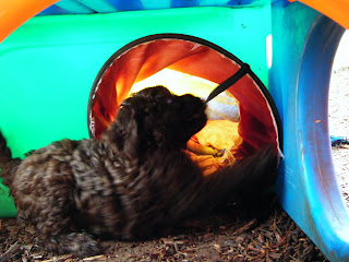 puppy dashes into a tunnel