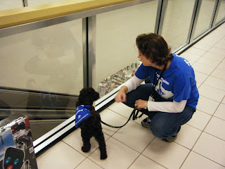 Alfie and I look down at the escalators through a glass barrier