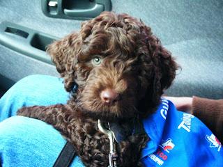 Alfie in his puppy jacket
