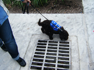 Alfie and I on opposite sides of a grate in the sidewalk