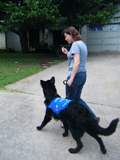Petey striding along in his blue work jacket, looking up to me as I talk to him and hold a treat up near my face