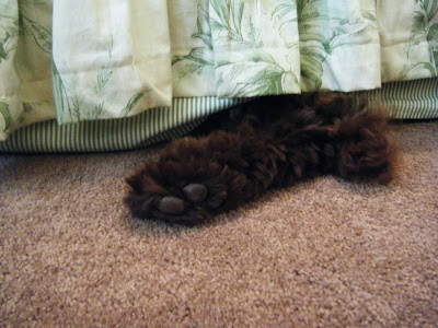 a bit of Alfie's furry brown rear paw, and a smidgen of tail, are showing from under the bedskirt