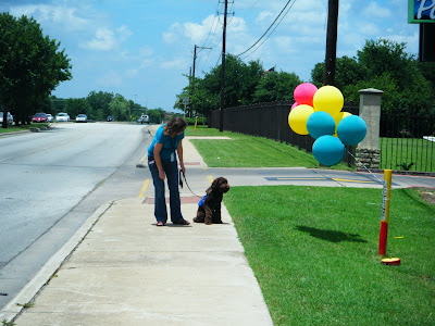 Alfie's sitting, absorbed in watching a bunch of colorful balloons; I'm bending over trying to get his attention