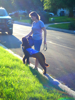 Alfie and I are stepping up a curb; he's getting a treat while he waits for me; the sun's going down, turning the edges of his fur golden