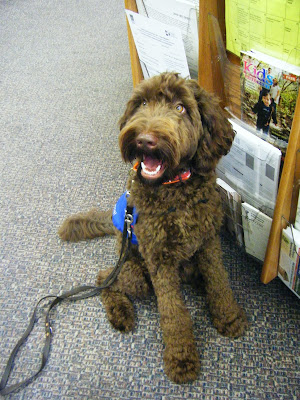 Alfie's sitting, smiling, looking up, in front of a rack of publications at the library