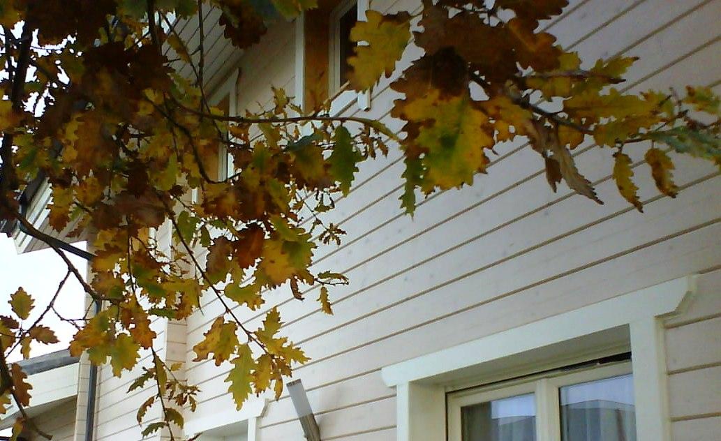 Maison en bois massif quel chauffage choisir pour une - Quel chauffage choisir pour une maison ancienne ...