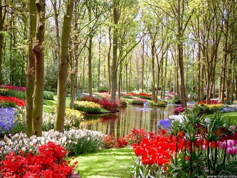 Modern Home Gardens And Flowers