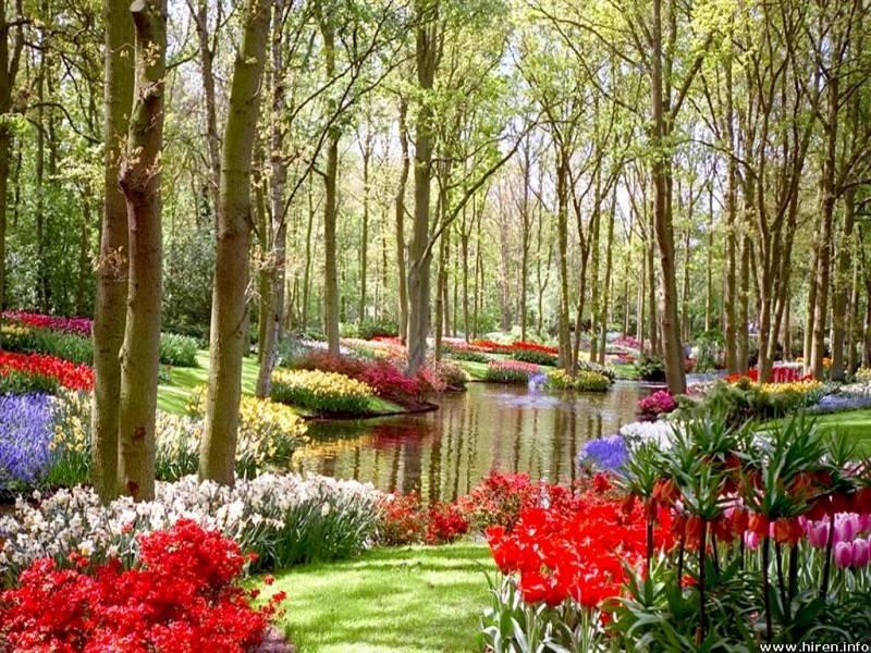 Modern home gardens and flowers for Home flower garden designs
