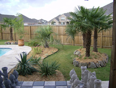 landscaping palm trees in home garden