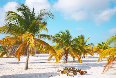 Small beach palm trees