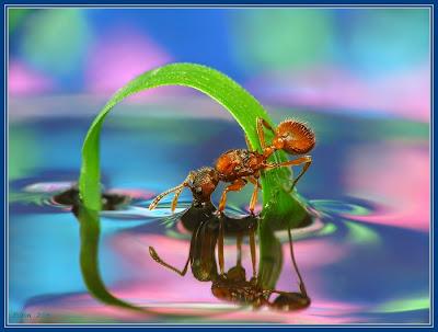 amazing+nature.jpg