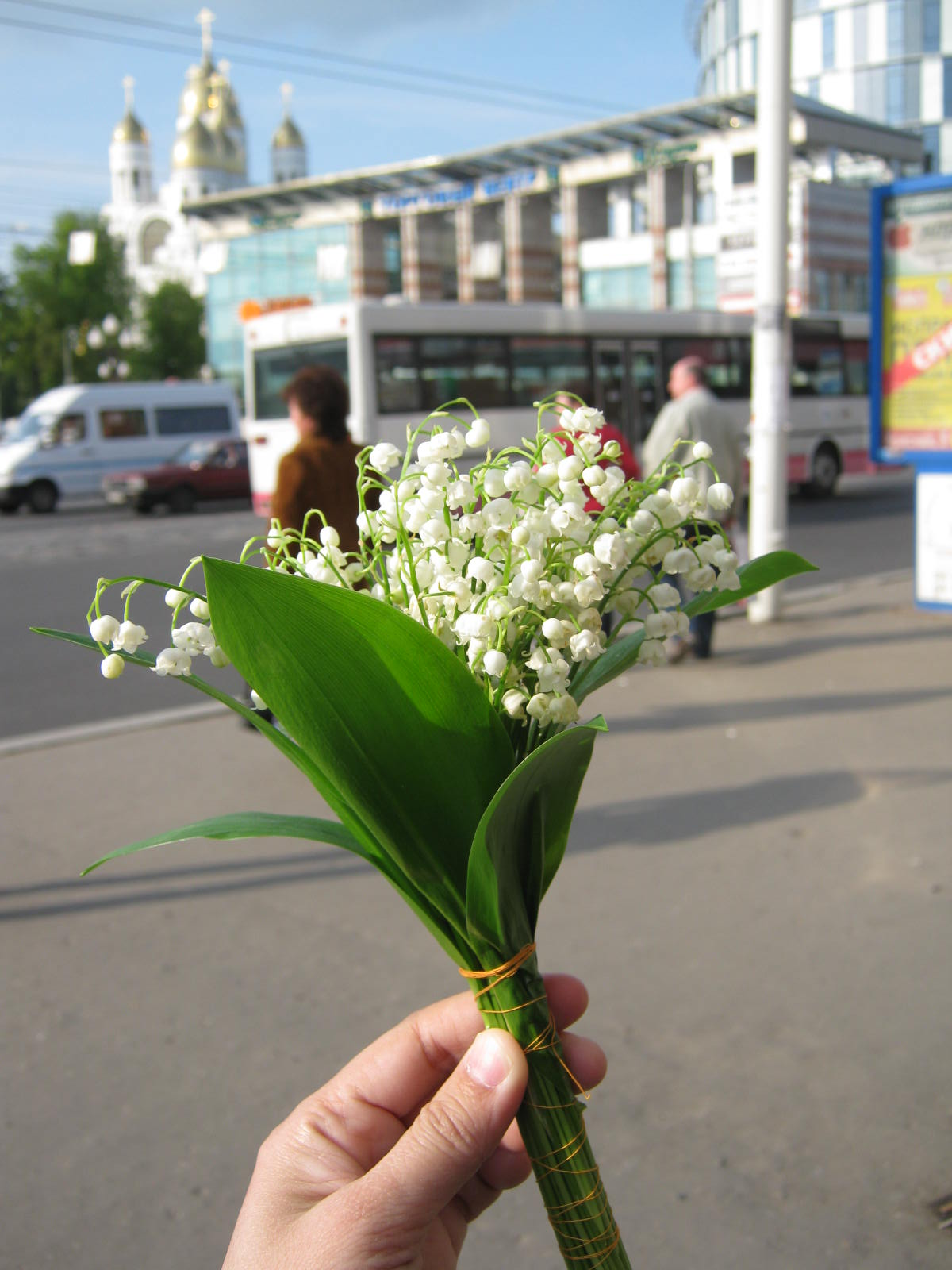 living in russia lily of the valley return of street peddlars or more accurately old people or pensioneers sell them in little bouquet like this it is delicately soaked in water before the frangrance izmirmasajfo