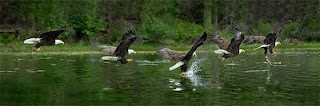 'Eagle Talons'