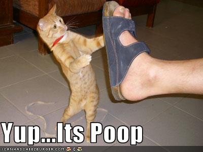 What Makes A Cats Poop Black
