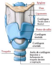 Anatomia e fisiologia do paladar