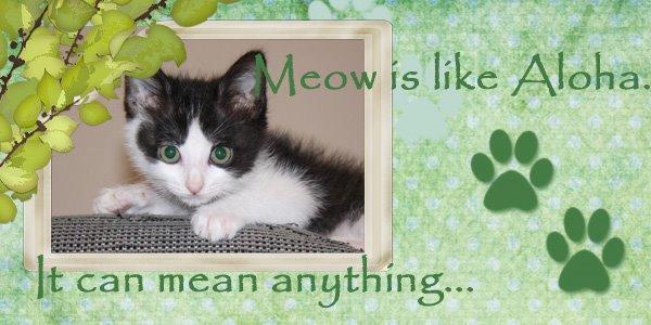 Meow Is Like Aloha...