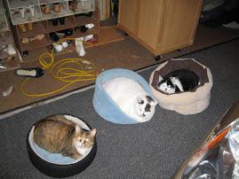 The kitties were nestled///