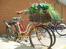 Bike Basket Bloomin'.