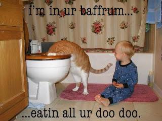 funny cat-5