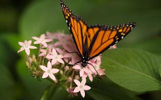 [Resim: Butterfly-701715.jpg]