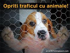 Opriti traficul cu animale!