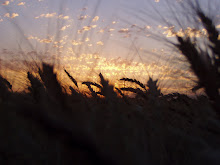 SUNRISE OVER THE WHEAT