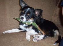 Marmee's Dog