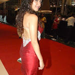South Indian Actress - Celebrity Photos