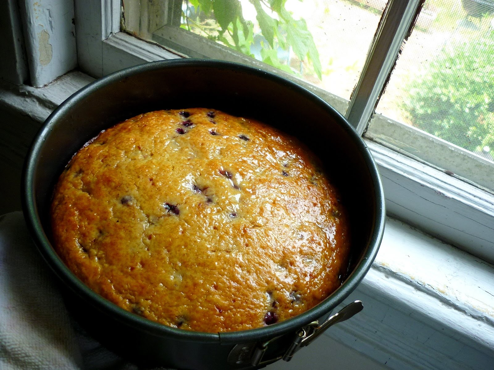 Food for Poems: Olive Oil Yoghurt Cake with Wild Blueberries and Lemon