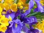 Fiore di romania