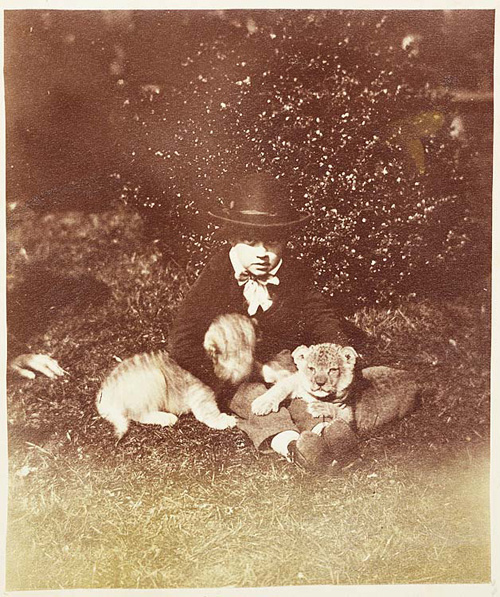 Lion Cubs. Photographer: John Dillwyn Llewelyn. Other title : 'Lion Cubs three weeks old at Clifton Zoological Gardens'. Date: 16 March 1854. Medium: Print taken from a collodion negative.