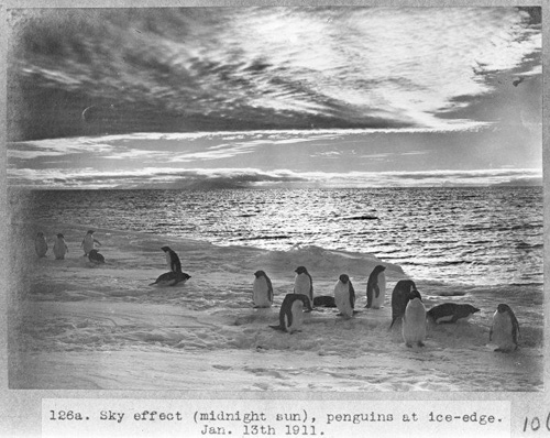 "Sky effect (midnight sun), penguins at ice-edge. Taken by Herbert George Ponting on 13 January 1911 during the British Antarctic (""Terra Nova"") Expedition (1910-1913)."