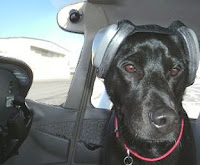 mutt muffs dog headphones