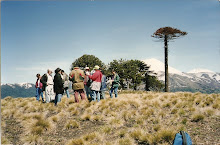 Cordillera Las Raíces.