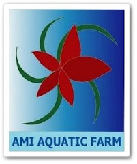 AMI AQUATIC FARM